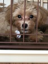 我が家の愛犬その②